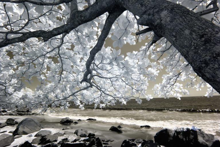 Comercialização de imagens: Viagens e Natureza